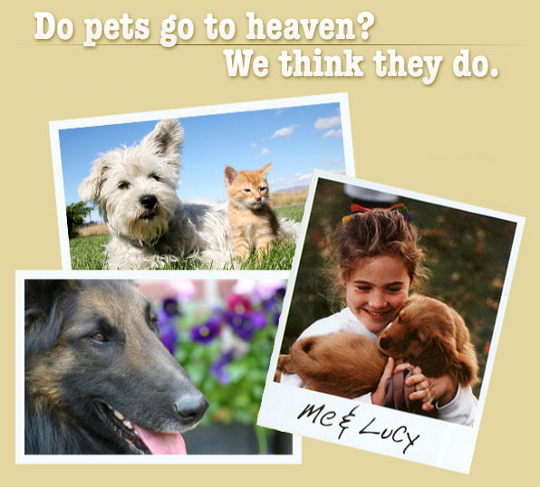Do pets go to heaven? We think they do.